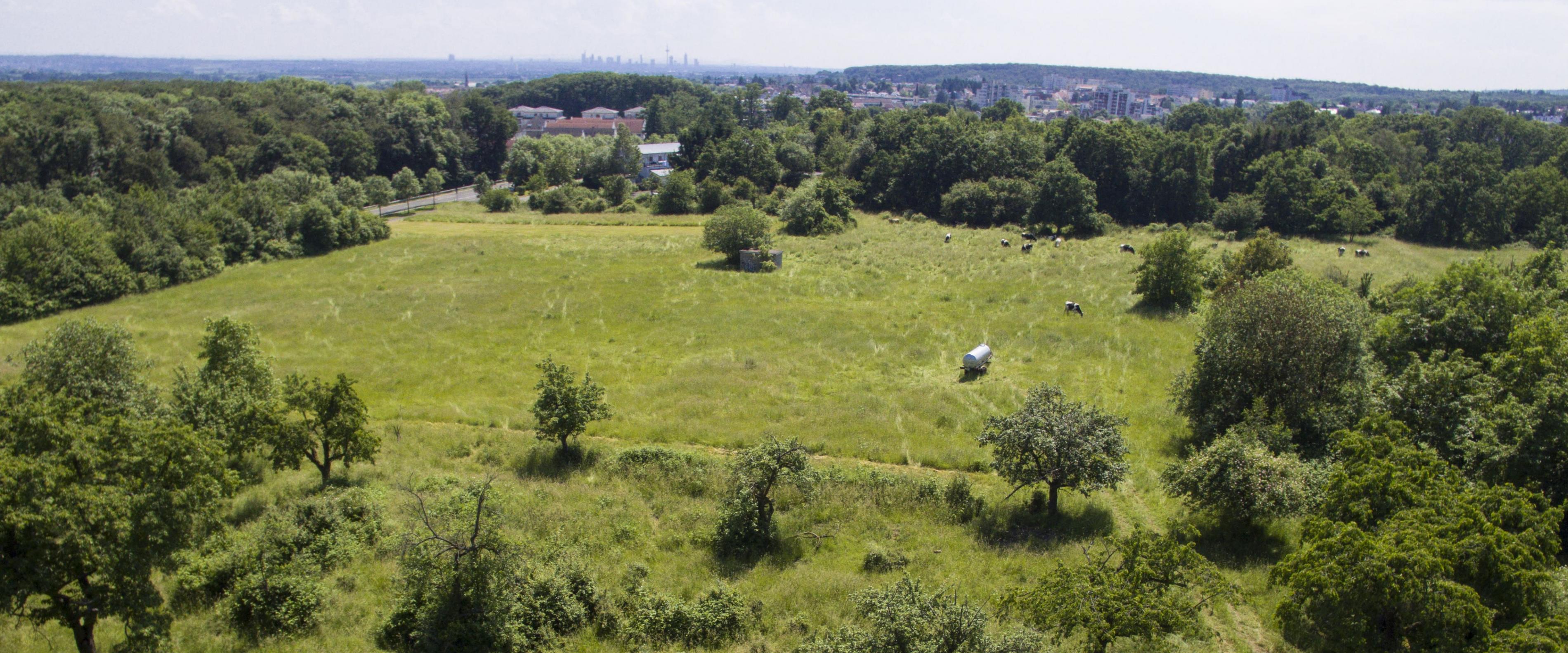 Grundstück Wiese Grün